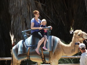 Camel riding at the Phoenix zoo