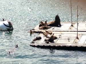 In my next life I want to be a sea lion!