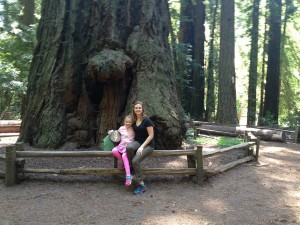 Henry Cowell State Park Old growth redwoods