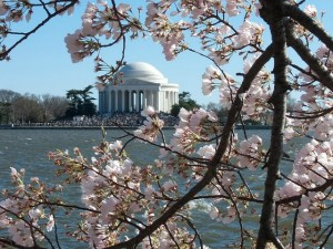 spring break at Cherry Blossom Festival
